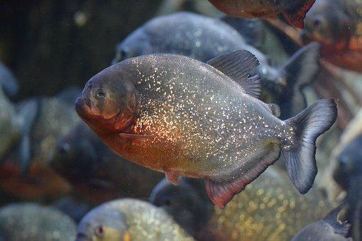 Fish Dangerous Underwater Exotic Predator