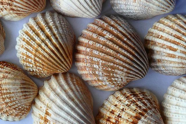Free Photo Sea Shell Clam Ocean Sea Shells Free
