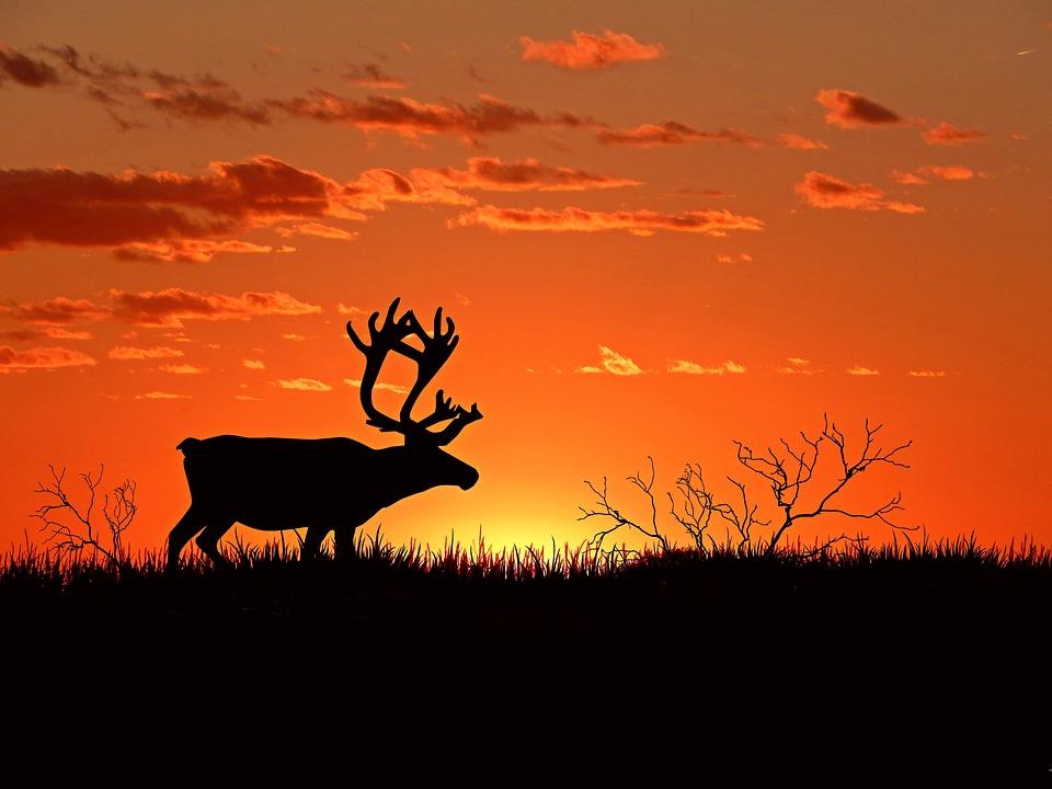 Weihnachtsbilder Elch.500 Kostenlose Elch Und Hirsch Bilder Pixabay