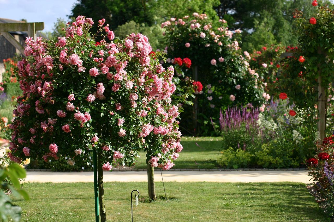 обработка кусты роз названия и фото конечно, те, для