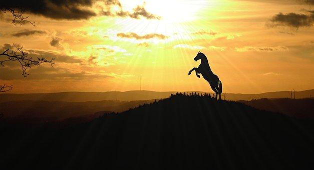Cavalo, Animal, Natureza, Paisagem
