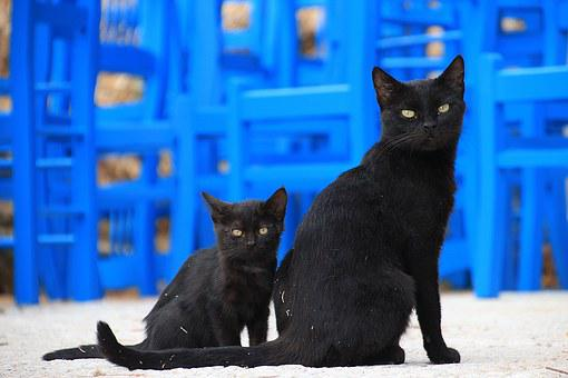 Cat, Two, Black, Greece, Animals