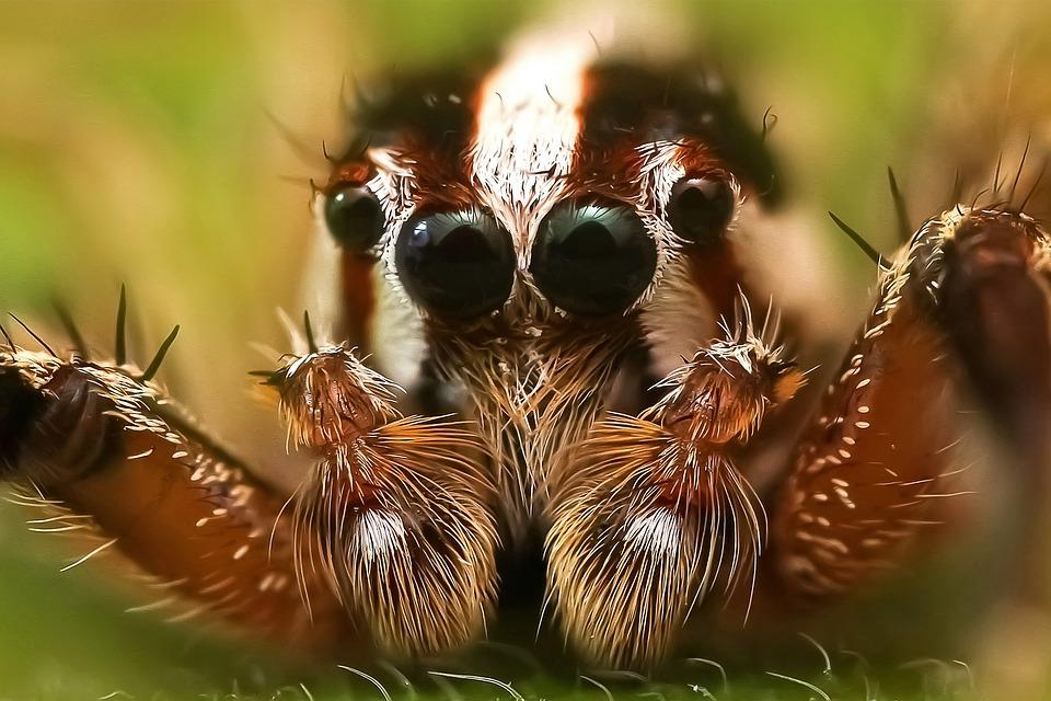 jumping spider insect macro spider colors detailed