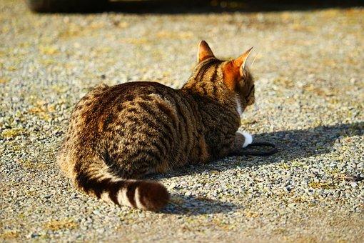 chlpatý mladý mačička