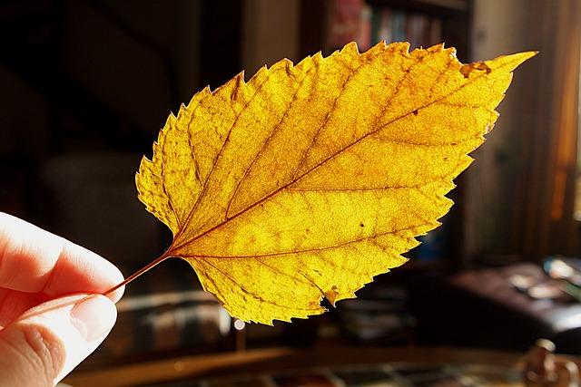 Free photo: Dried Leaf, Tree Leaf, Yellow - Free Image on ...