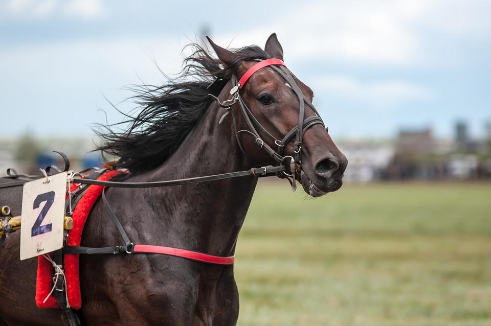 Race, Horse, Racehorse