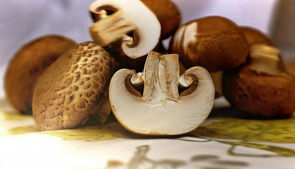 mushrooms-1167181__340.jpg