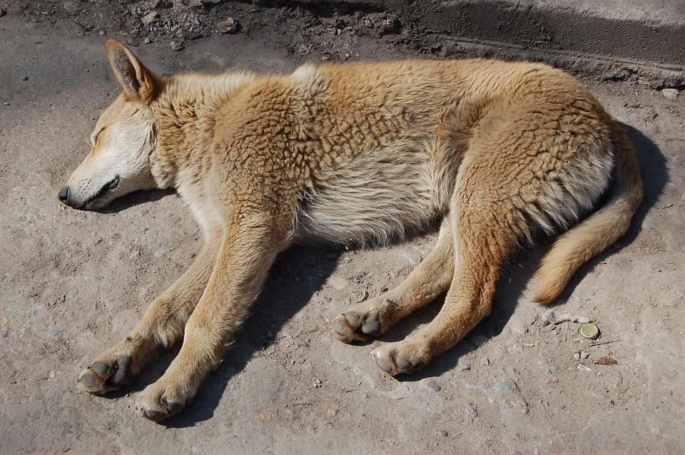 Nature Cat Dog