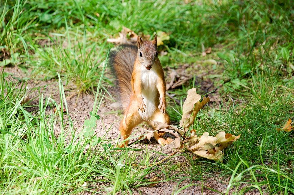 Squirrel, Animal, Animal Planet, Animal Themes, Animals