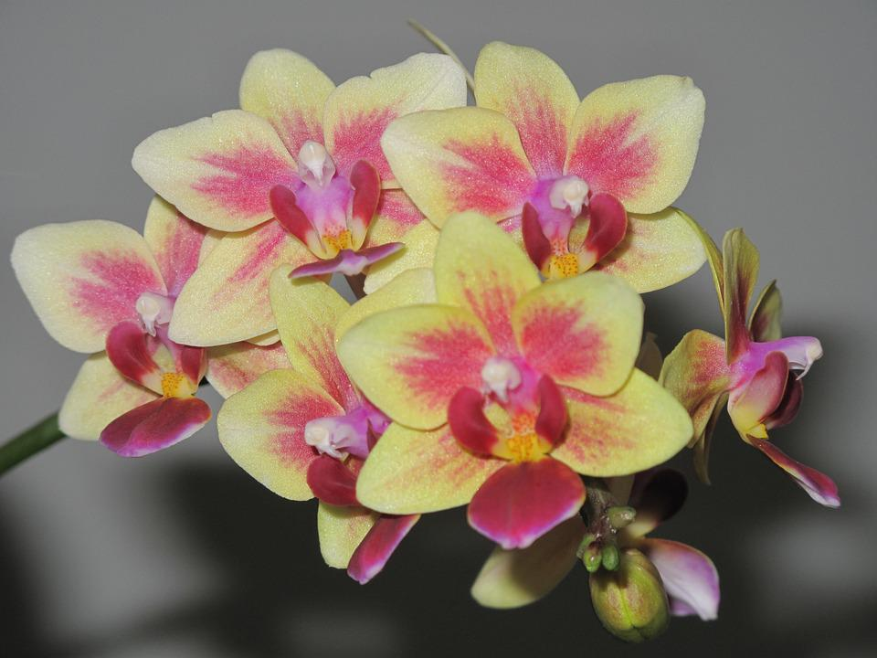 free photo orchids, flowers, blooming, plant  free image on, Beautiful flower