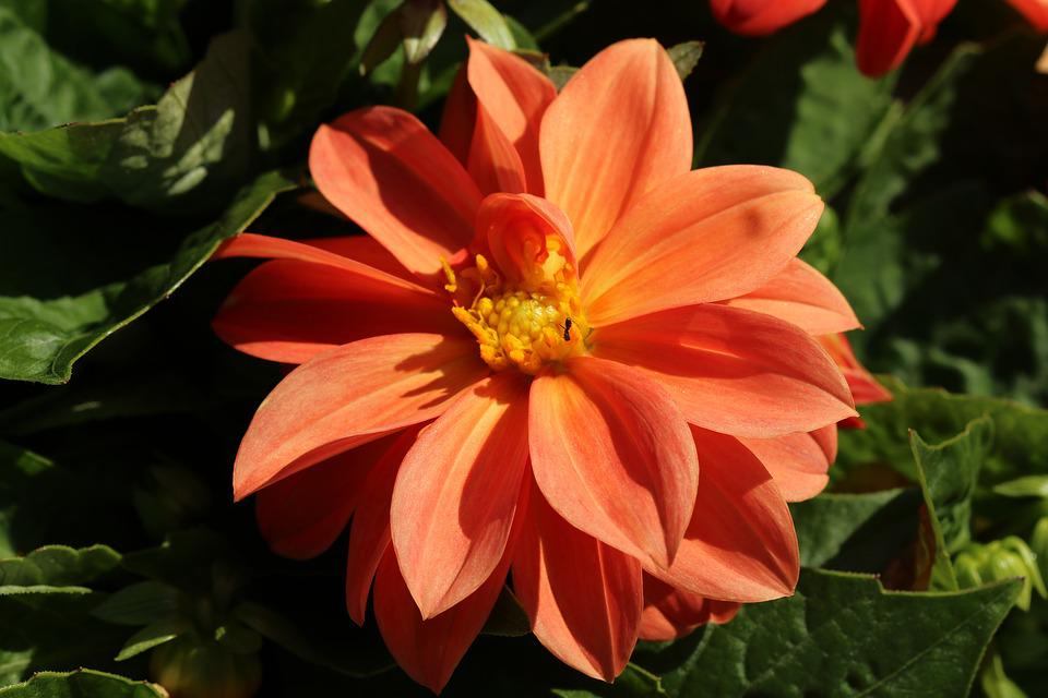 orange blätter  Möbelideen