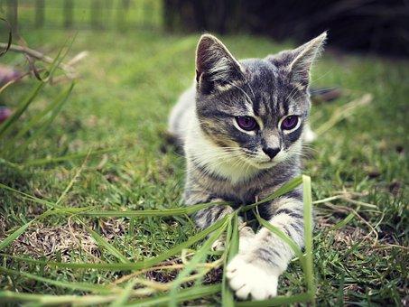 Kitten, Cat, Grass, Domestic, Pet, Young