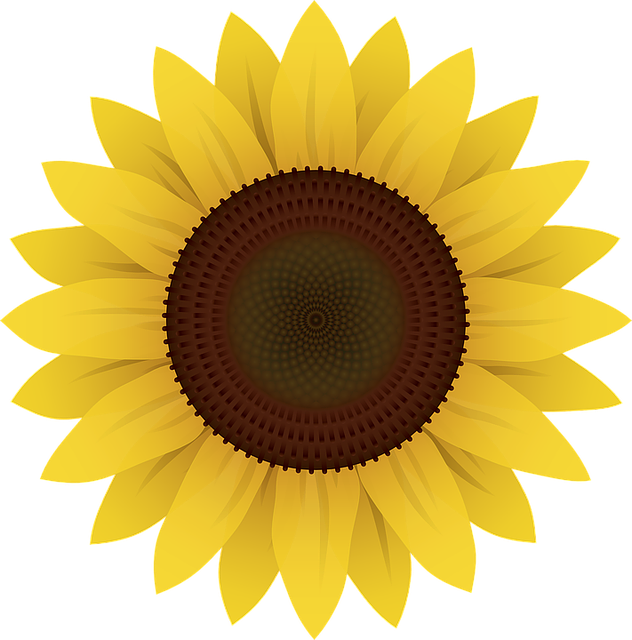 Sunflower Png Images Transparent Background: Flowers Sunflower Plants · Free Vector Graphic On Pixabay