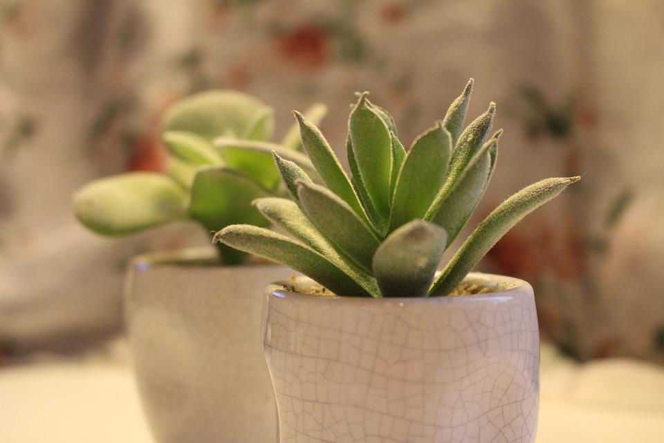 Succulent Plant, Fake Plant, Seedlings, Desk