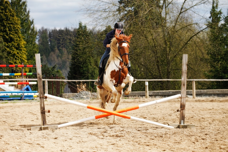 Cheval saut obstacle photo gratuite sur pixabay - Frison saut d obstacle ...