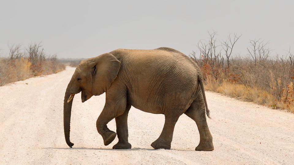Foto gratis elefante beb elefante frica imagen - Fotos de elefantes bebes ...