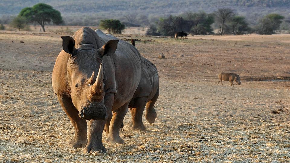afrikanza-damaraland-rhinos