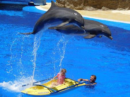 Dolphins, Water, Jump, Water Park