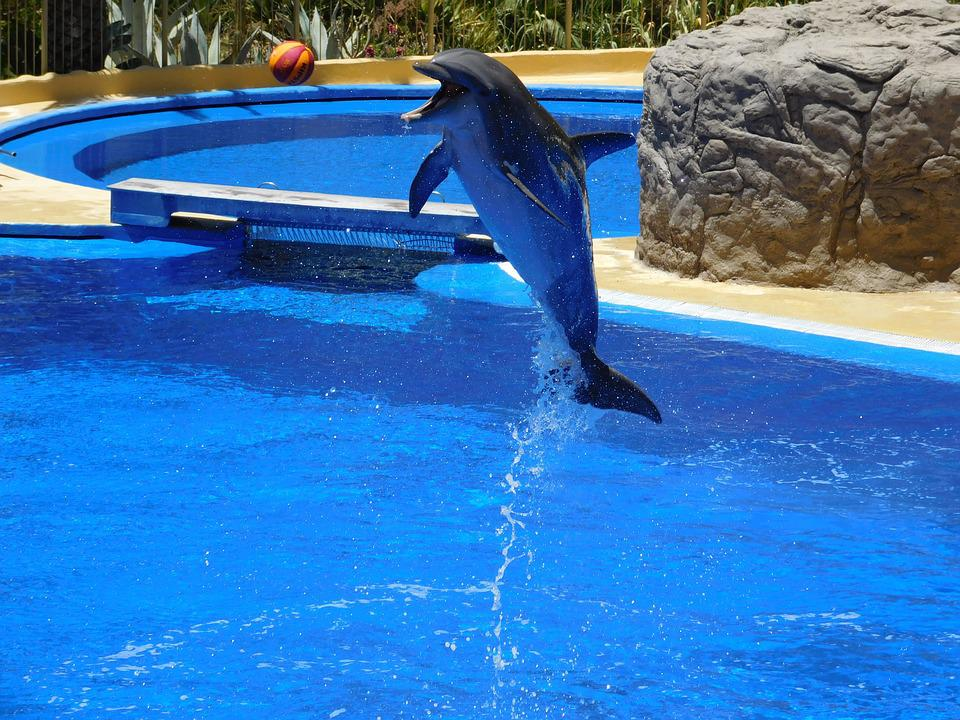 Dolphins, Water, Jump, Water Park, Waterfalls