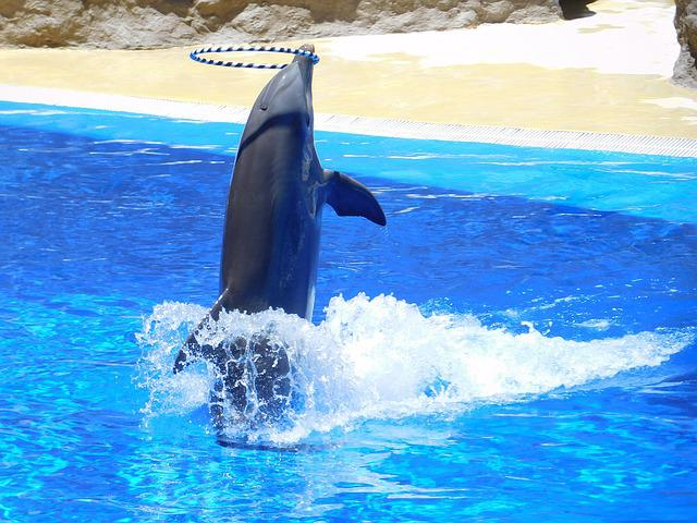 Free Photo Dolphins Water Jump Water Park Free Image