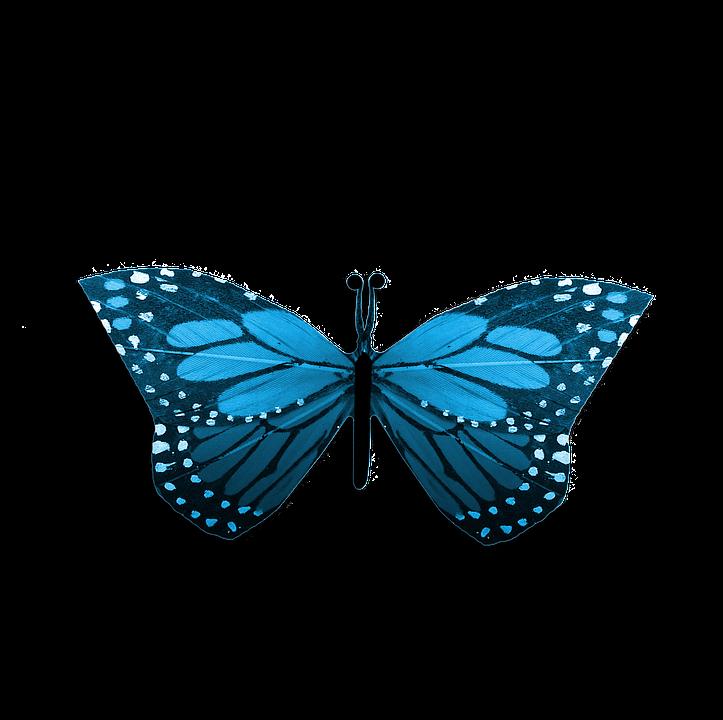 Célèbre Illustration gratuite: Papillon, Bleu, Dessin, Résumé - Image  EG41
