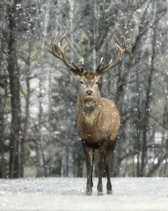雪と鹿の美しくてかっこいい画像