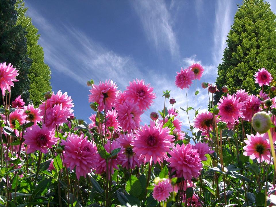 a beautiful day 1170686_960_720