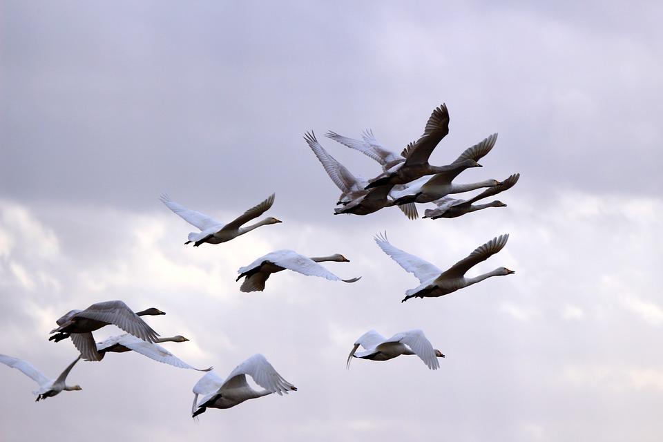 Le ciel les oiseaux et ta femme full story - 4 3