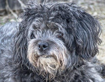 Dog, Abandoned, Stray Dog, Poodle