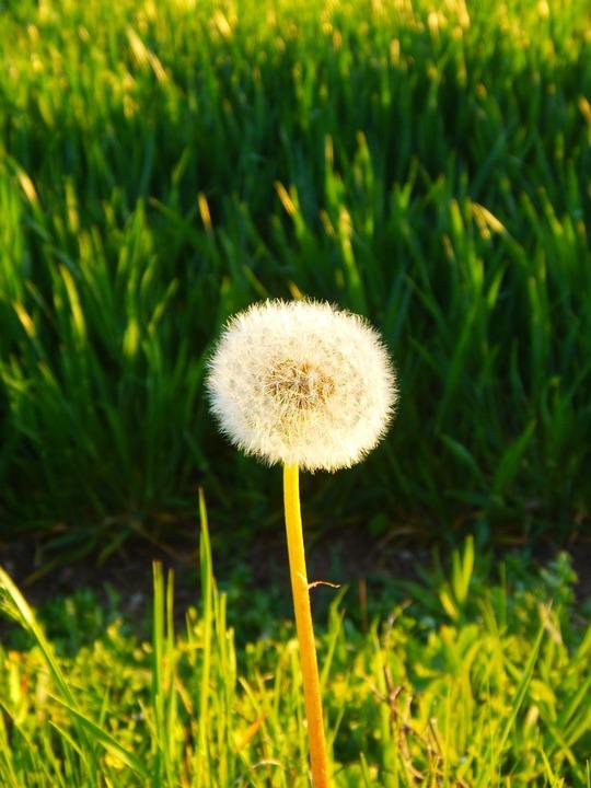 Фото летние цветы в природе 71