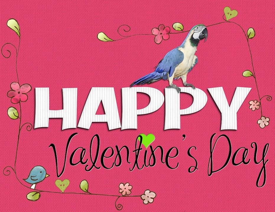 Außergewöhnlich Valentine, Tag, Frohen Valentinstag, Rosa, Vogel