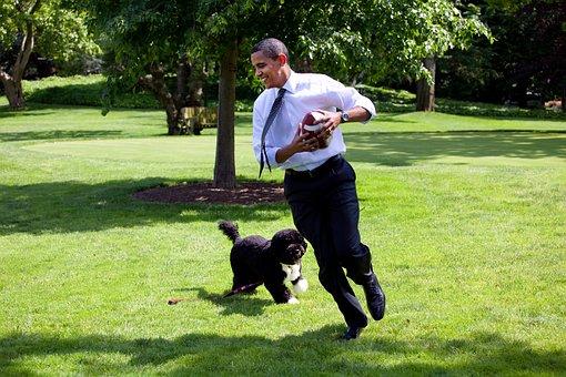 バラク-オバマ大統領およびBo, 2009, 再生, 実行, Boは、家族と犬