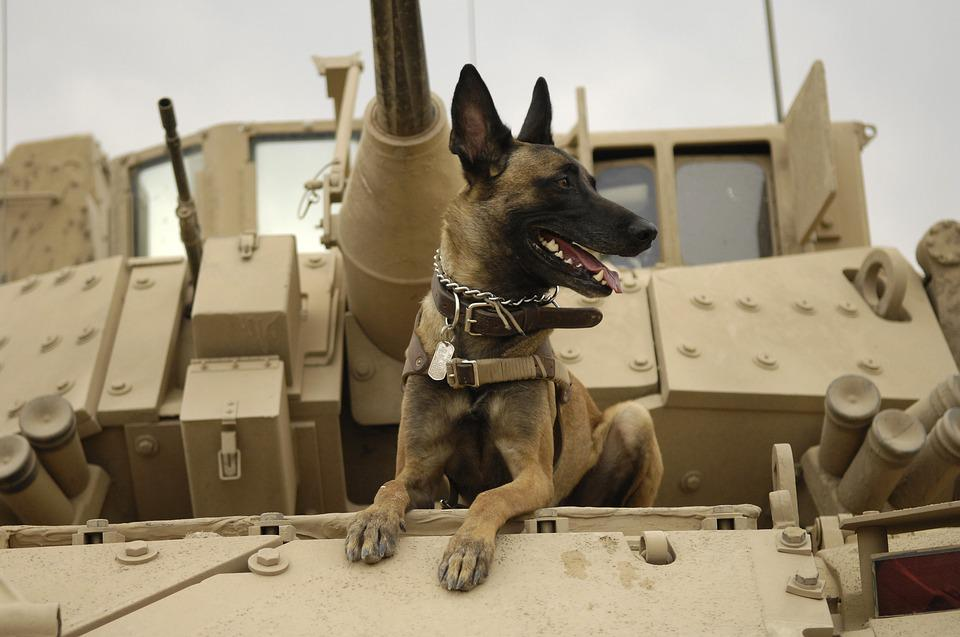 Amazing War Army Adorable Dog - dog-1174482_960_720  Best Photo Reference_48775  .jpg