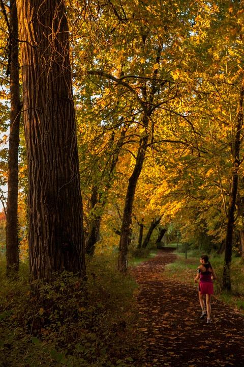 Fall Running Trail · Free photo on Pixabay