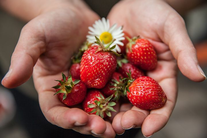 journal mobile phone and best strawberry Want to lose weight and keep it off thousands have with calorieking start using our free diary and we'll show you how to lose the weight and keep it off for life.