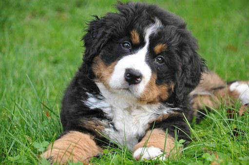 25 Best Dog Breeds For Kids And Your Family 7