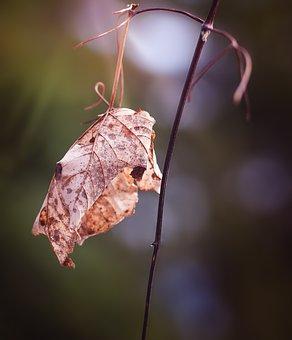 Hasil gambar untuk daun kering di kaboompics