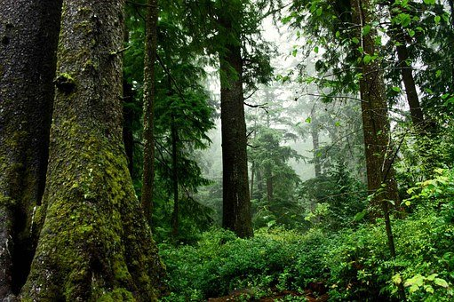 Forêt, Bois, Nature, Arbres, Mousse
