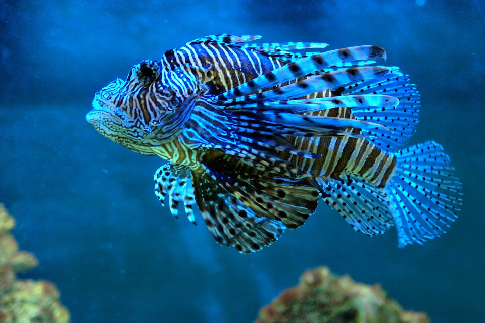 fish blue water tropical free photo on pixabay