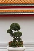 free photo bonsai tree bonsai tree small free image on pixabay 738463. Black Bedroom Furniture Sets. Home Design Ideas