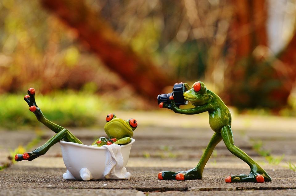 Frog Bath Photo Shoot · Free photo on Pixabay