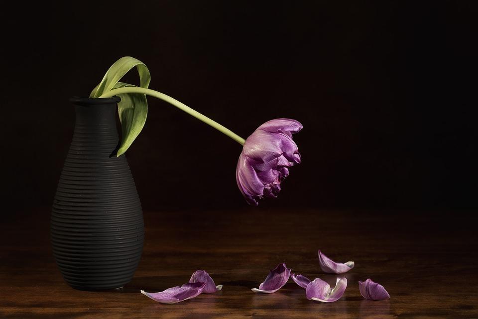 Nature Dead Flower Tulip Still Life Flora