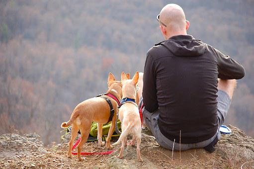 Man, Dogs, Hiking, Edge, Cliff, Camping
