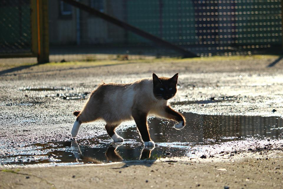 Mokré mačička Foto