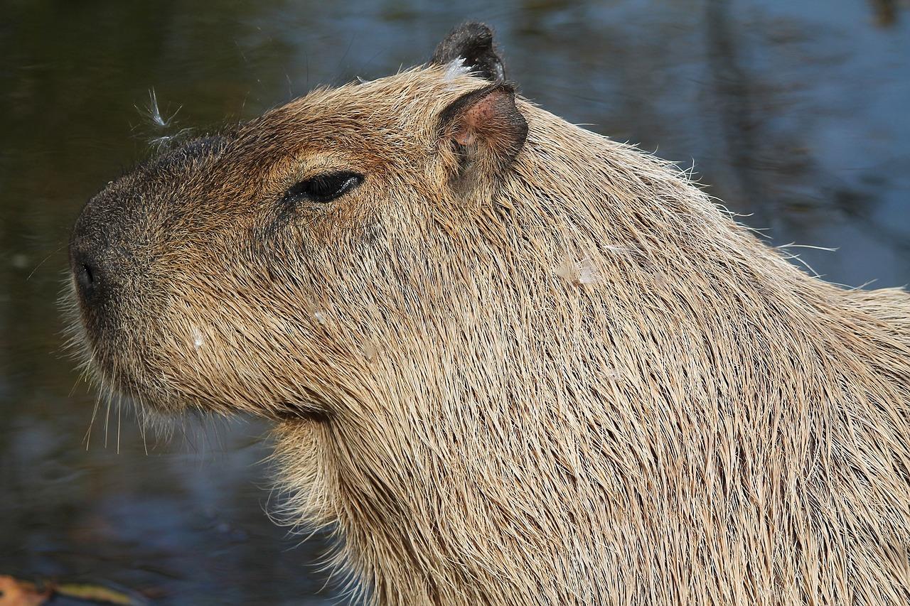 млекопитающие животные фото и название зажигает идея путешествовать
