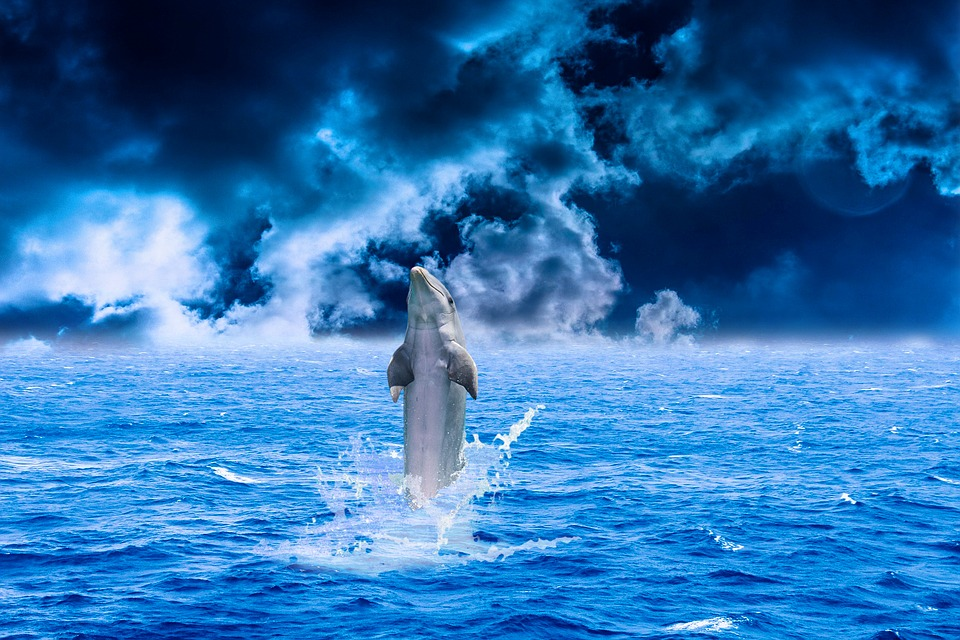 Free photo: Dolphin, Sea, Water, Animal, Fish - Free Image ...