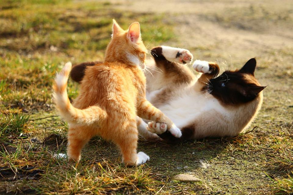 Cat Vs Dog Fight Videos