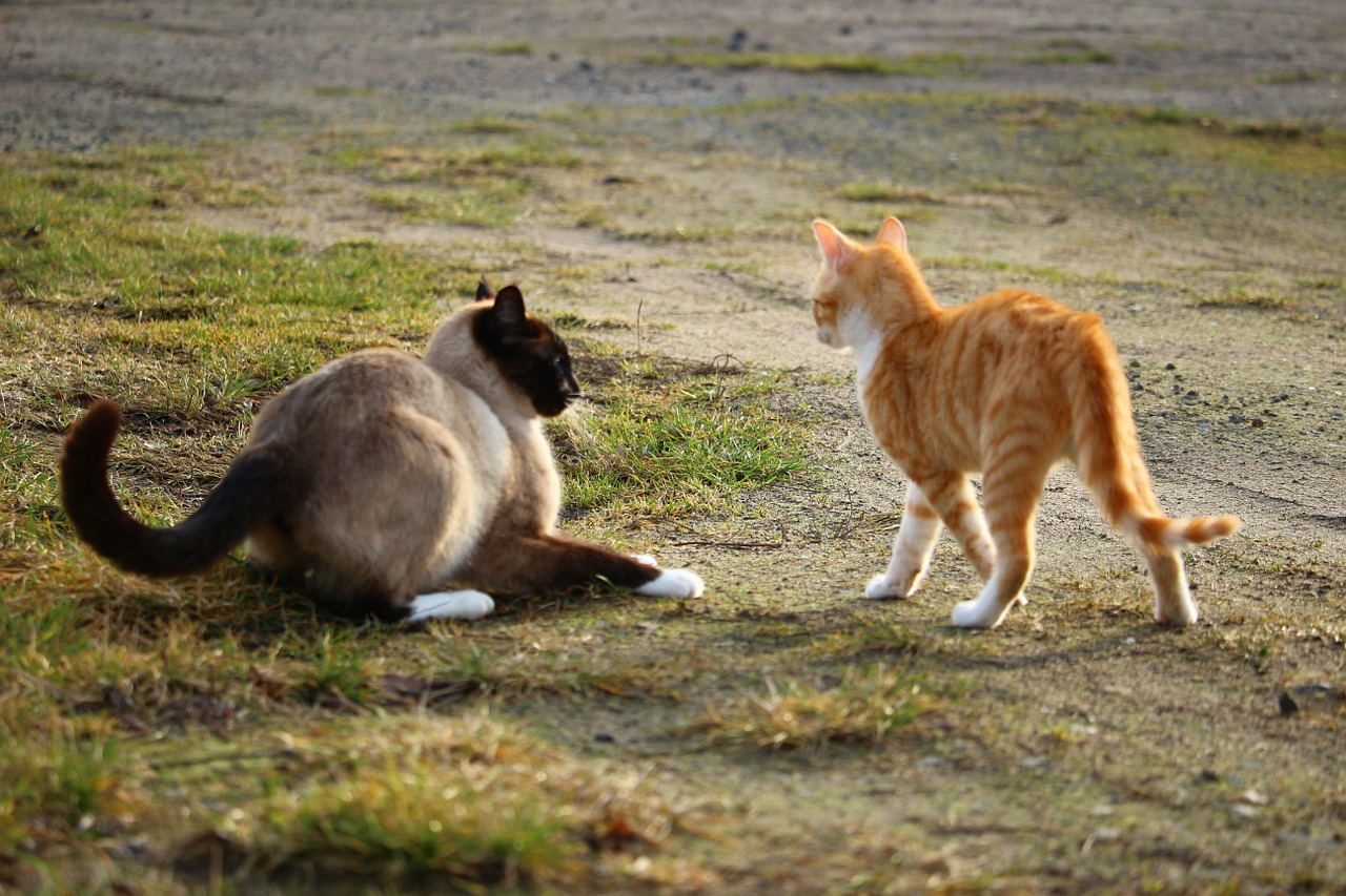 should male cats be spayed