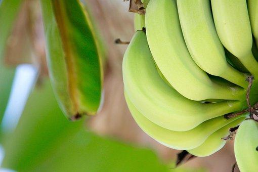 Shrub, Banana, Banana Plant, Fruit