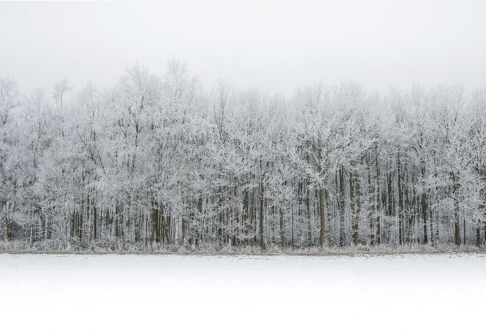 Free photo: White, Snow, Forest, Winter, Cold - Free Image on Pixabay ...